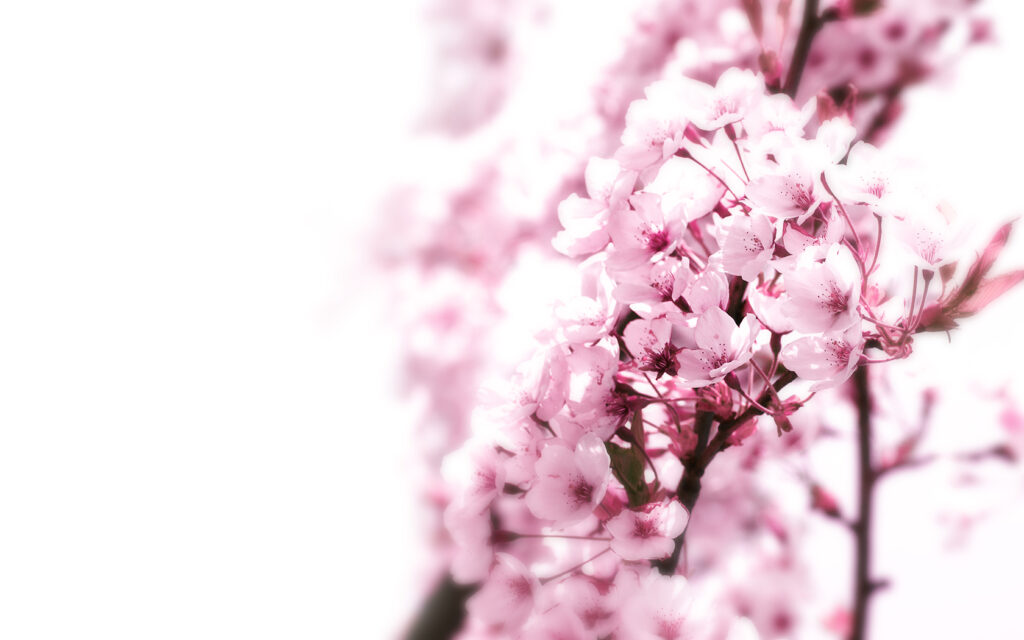 flowers background images