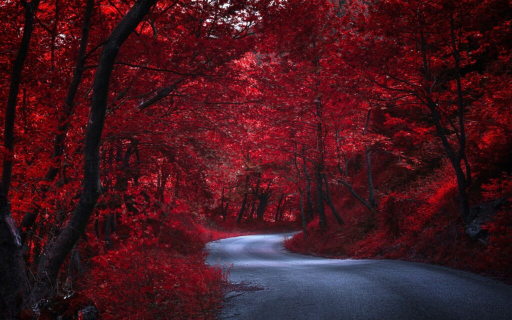 forest road background images