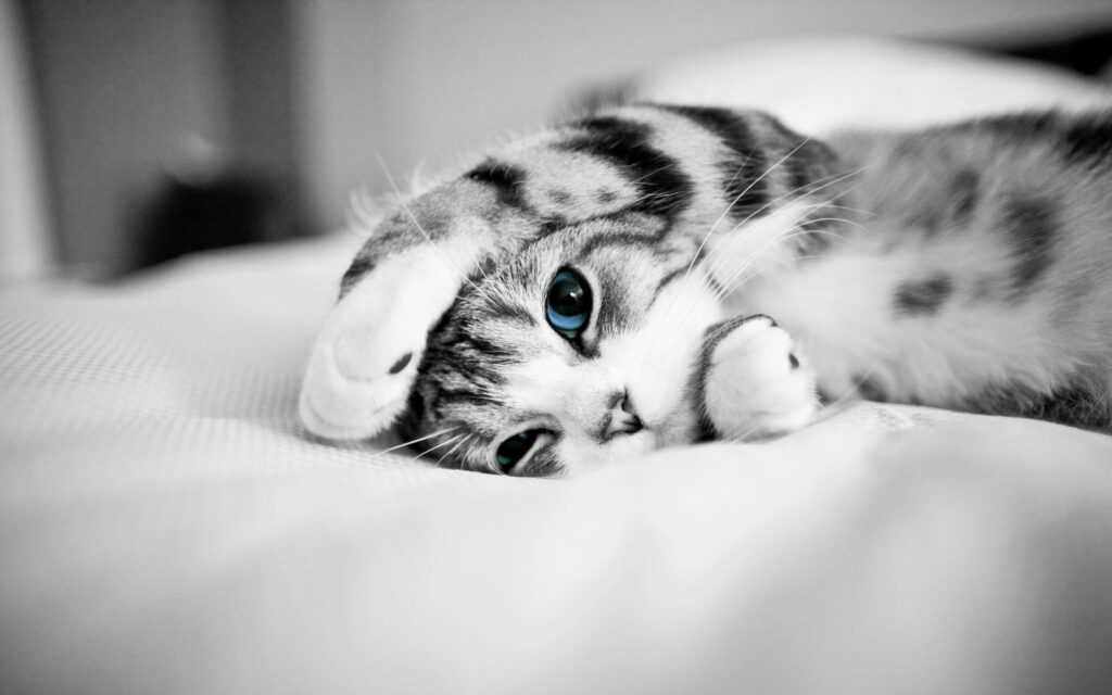cat background images