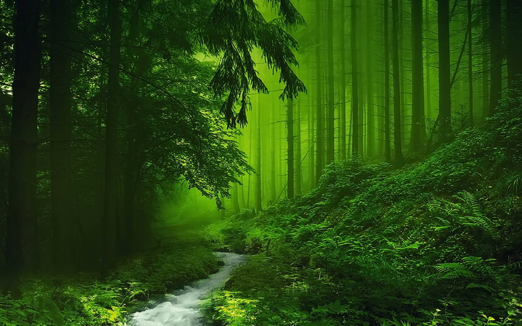 nature aesthetic wallpapers