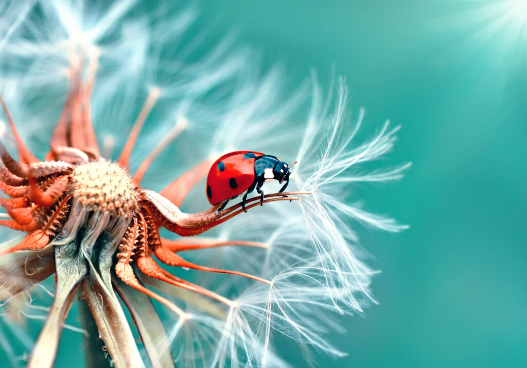insect beautiful wallpapers