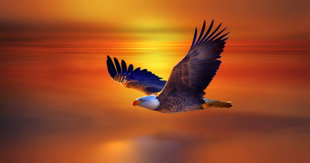 eagle cool wallpapers