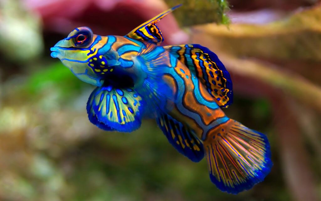 fish cool wallpapers