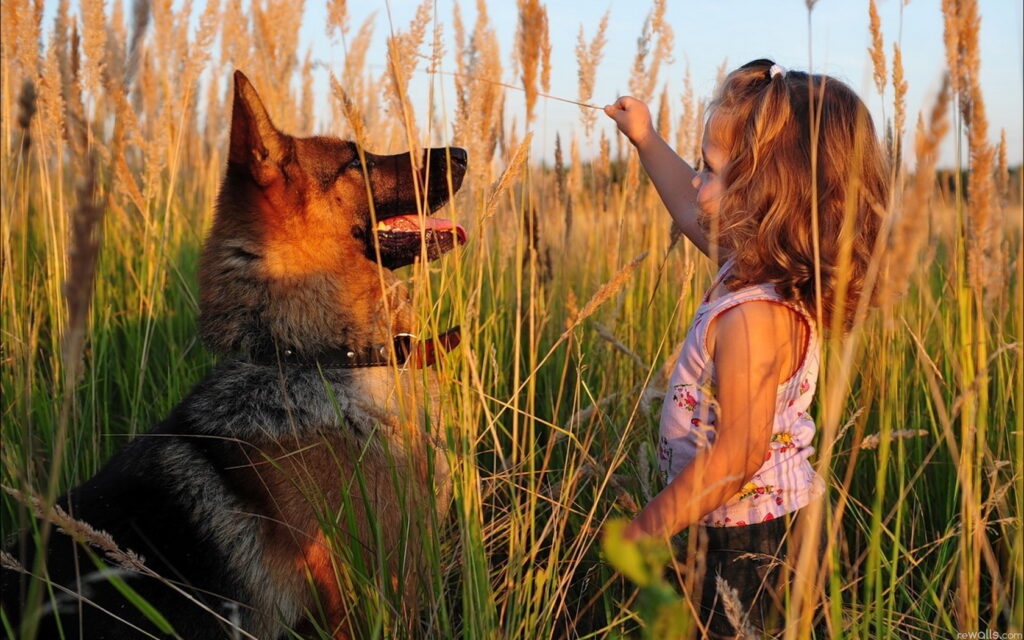dog and girl cute wallpapers