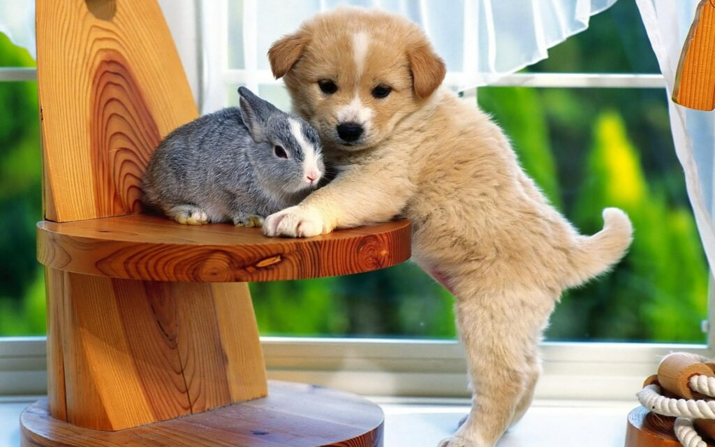 rabbit and dog cute wallpapers