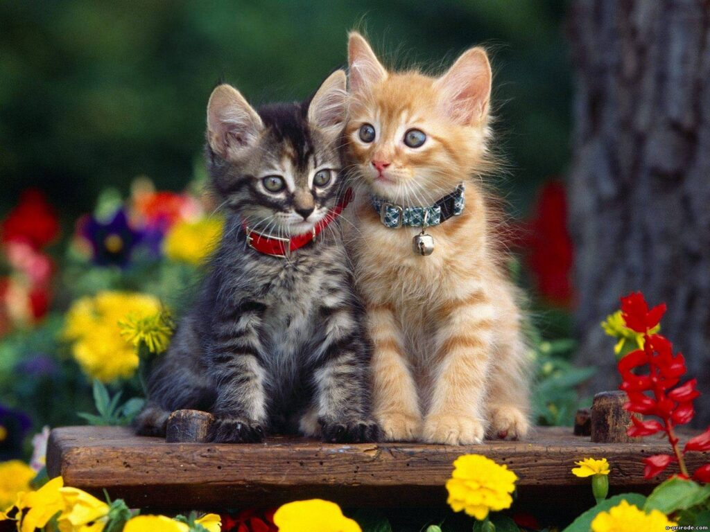 cats cute wallpapers