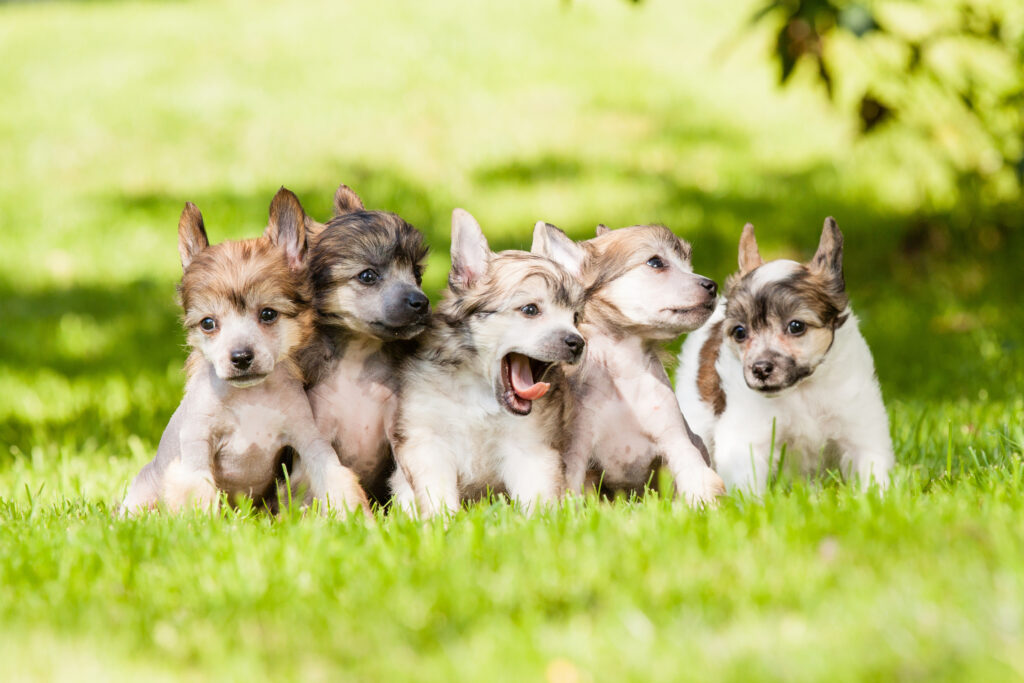 dogs cute wallpapers