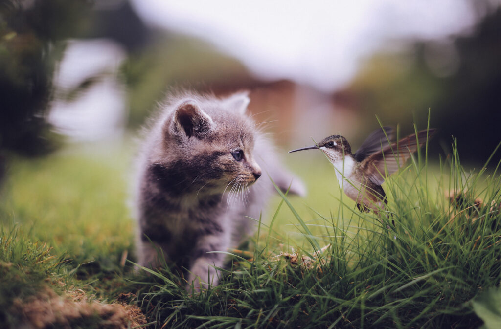 cat and bird cute wallpapers