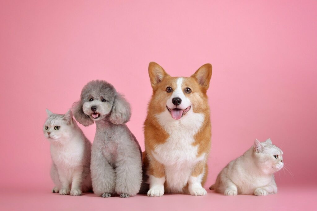 dogs and cats cute wallpapers