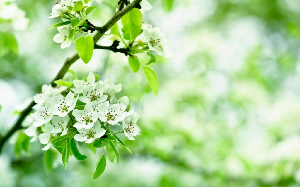 flowers green wallpapers