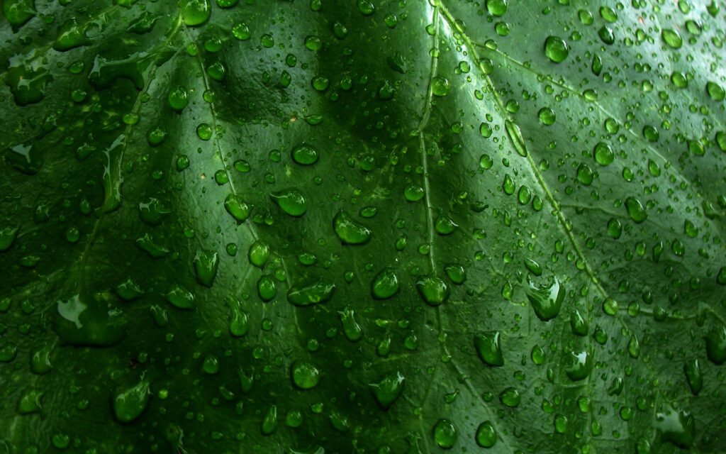 leaf green wallpapers