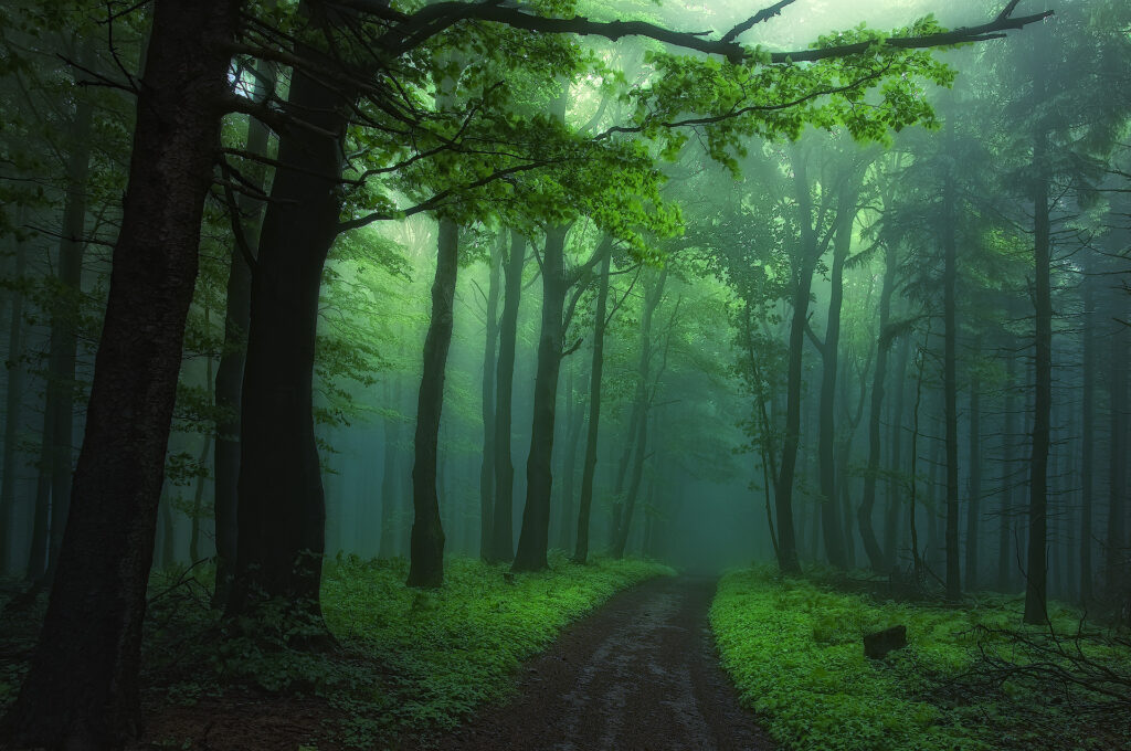 forest green wallpapers