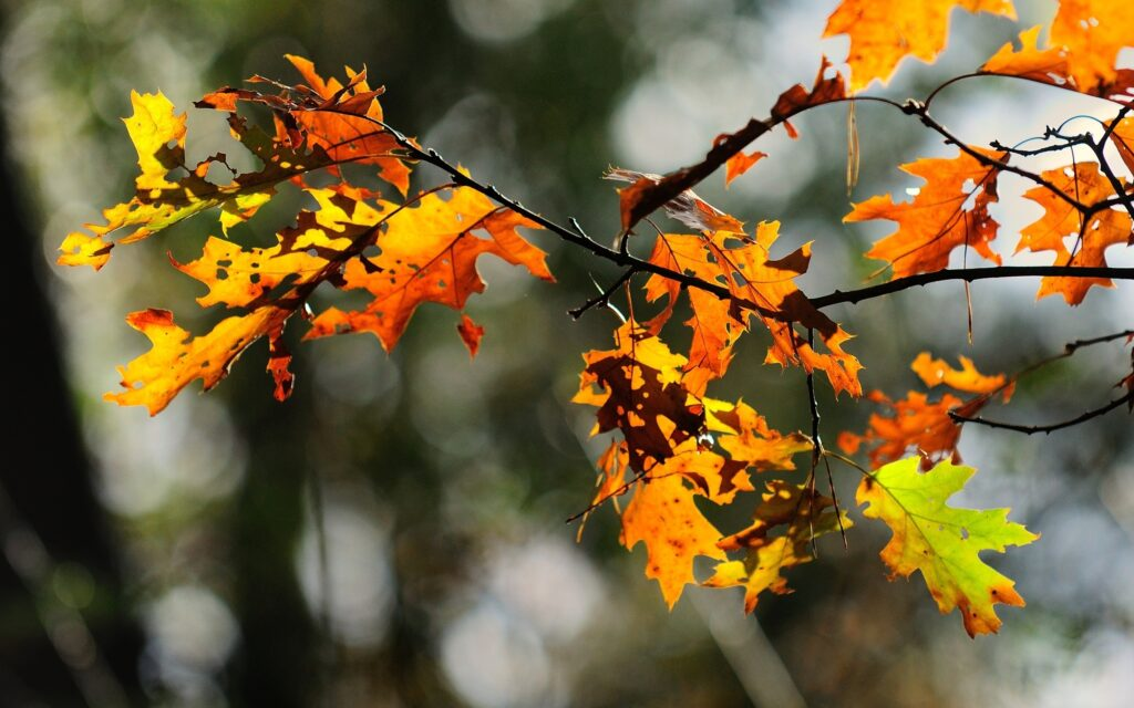leaves nature hd wallpaper