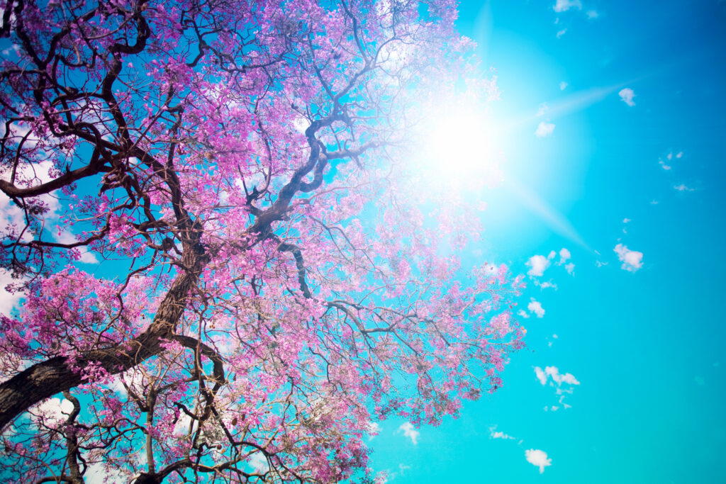 tree  nature wallpapers