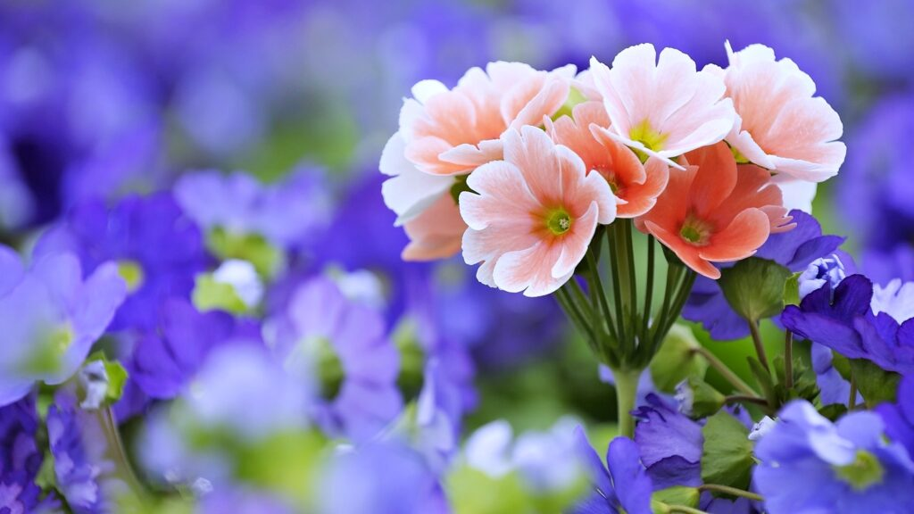 flower nature wallpapers