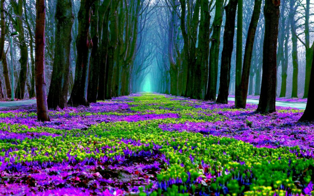 flower forest nature wallpapers