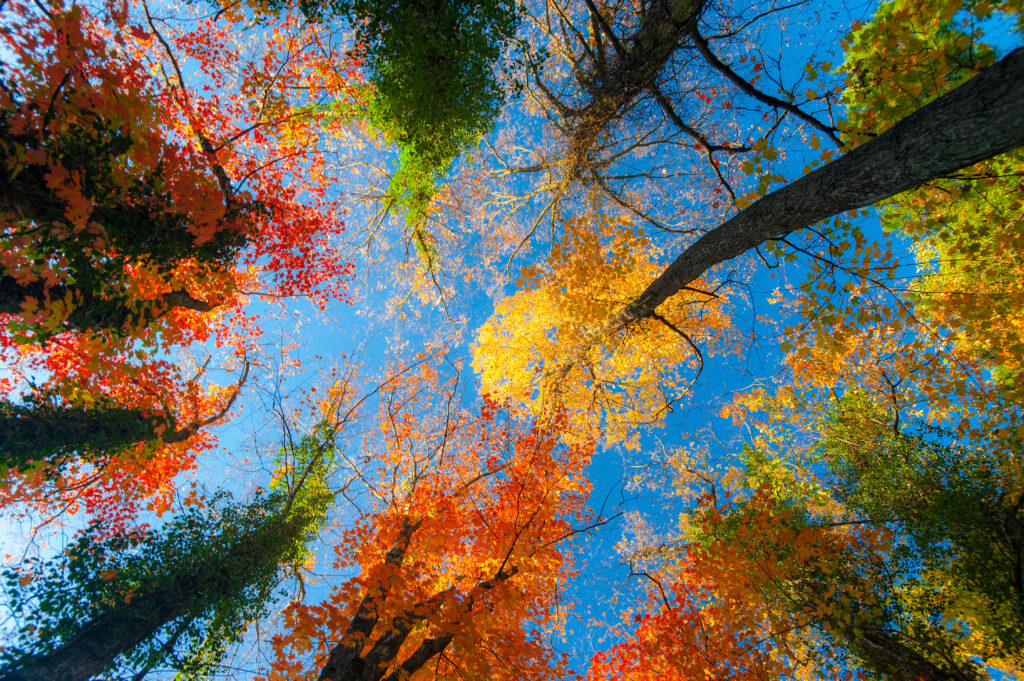 forest nature wallpapers