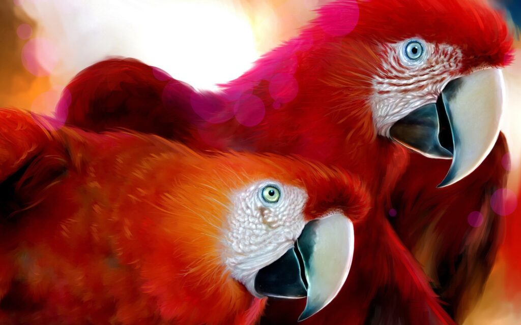 parrots red wallpapers
