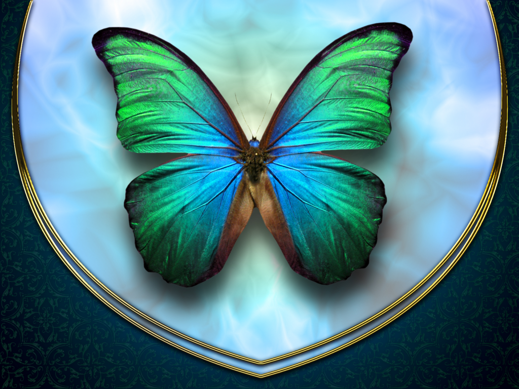 Butterfly Wallpapers